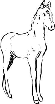 Perma Stempel Holzstempel - Pferd