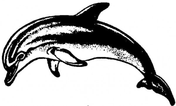 Perma Stempel Holzstempel - Grosser Delphin