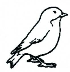 Perma Stempel Holzstempel - Vögeli