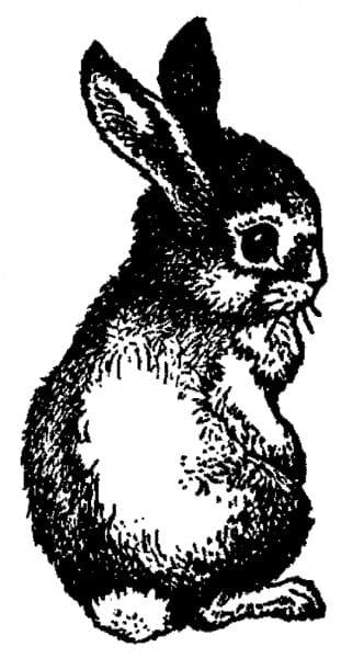 Perma Stempel Holzstempel - Baby Hase