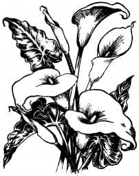 Perma Stempel Holzstempel - Calla Lily