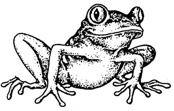 Perma Stempel Holzstempel - Frosch (Design 3)